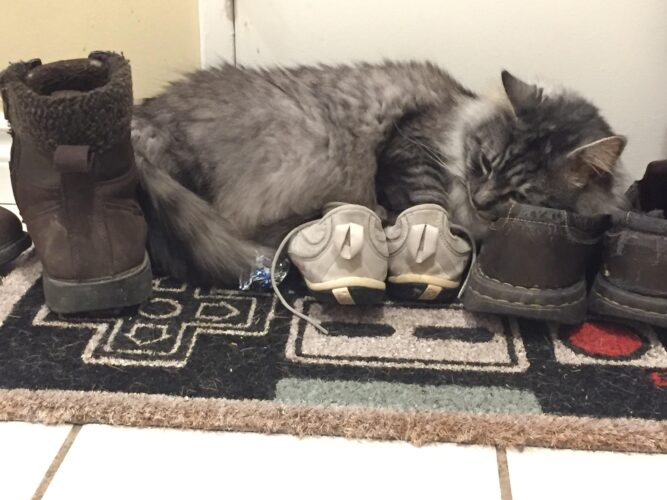 Why Does My Cat Lay On My Shoes?